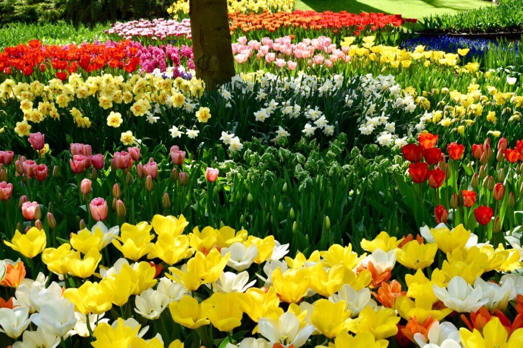 spring break in Amsterdam at Keukenhof gardens. Keukenhof photos
